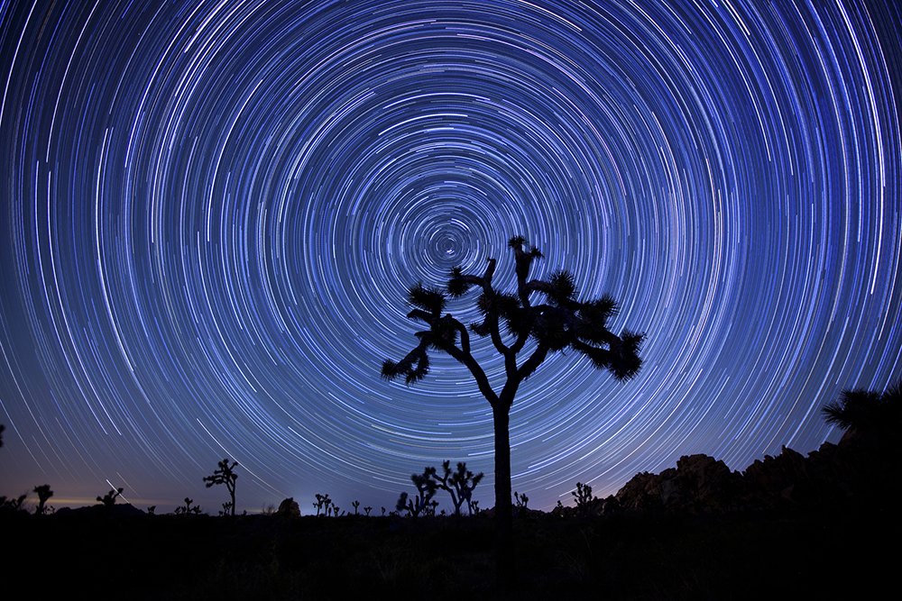 2-Joshua Tree Star Trails-1